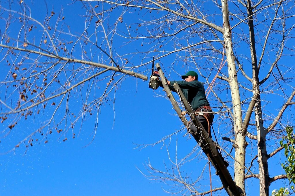 Contact Us-Riverview FL Tree Trimming and Stump Grinding Services-We Offer Tree Trimming Services, Tree Removal, Tree Pruning, Tree Cutting, Residential and Commercial Tree Trimming Services, Storm Damage, Emergency Tree Removal, Land Clearing, Tree Companies, Tree Care Service, Stump Grinding, and we're the Best Tree Trimming Company Near You Guaranteed!