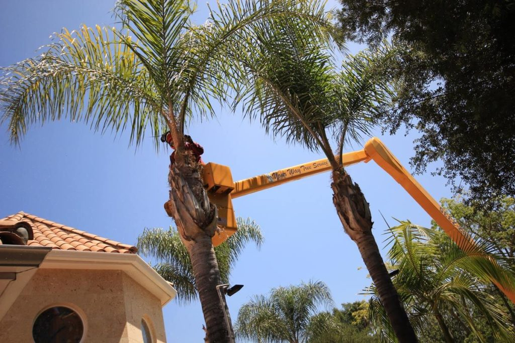 Palm Tree Trimming-Riverview FL Tree Trimming and Stump Grinding Services-We Offer Tree Trimming Services, Tree Removal, Tree Pruning, Tree Cutting, Residential and Commercial Tree Trimming Services, Storm Damage, Emergency Tree Removal, Land Clearing, Tree Companies, Tree Care Service, Stump Grinding, and we're the Best Tree Trimming Company Near You Guaranteed!