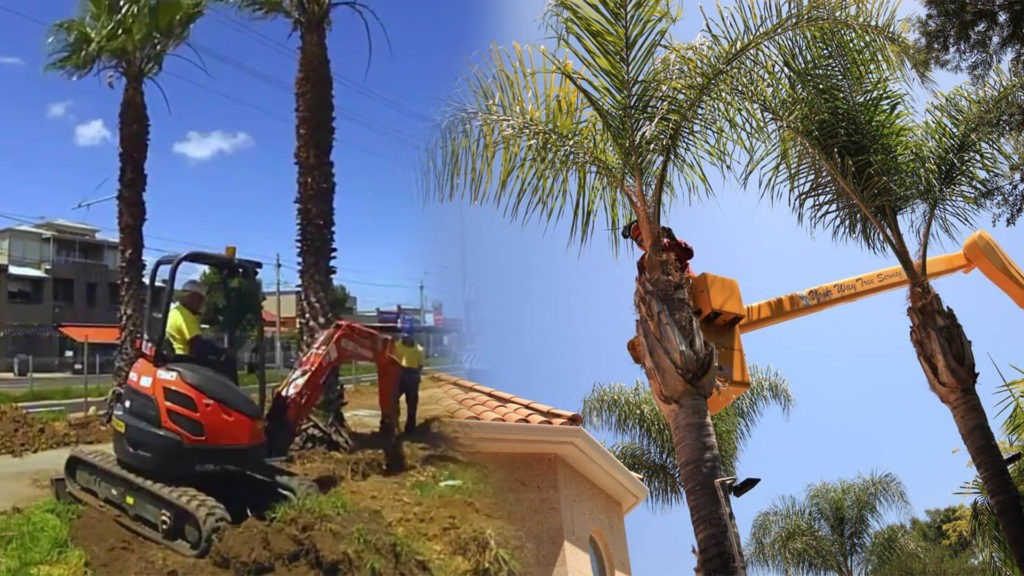 Palm tree trimming & palm tree removal-Riverview FL Tree Trimming and Stump Grinding Services-We Offer Tree Trimming Services, Tree Removal, Tree Pruning, Tree Cutting, Residential and Commercial Tree Trimming Services, Storm Damage, Emergency Tree Removal, Land Clearing, Tree Companies, Tree Care Service, Stump Grinding, and we're the Best Tree Trimming Company Near You Guaranteed!