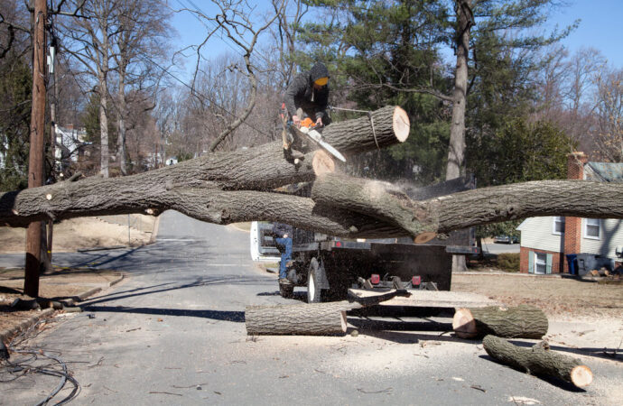 Residential Tree Services-Riverview FL Tree Trimming and Stump Grinding Services-We Offer Tree Trimming Services, Tree Removal, Tree Pruning, Tree Cutting, Residential and Commercial Tree Trimming Services, Storm Damage, Emergency Tree Removal, Land Clearing, Tree Companies, Tree Care Service, Stump Grinding, and we're the Best Tree Trimming Company Near You Guaranteed!