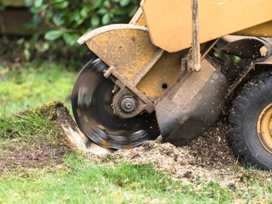 Stump Grinding-Riverview FL Tree Trimming and Stump Grinding Services-We Offer Tree Trimming Services, Tree Removal, Tree Pruning, Tree Cutting, Residential and Commercial Tree Trimming Services, Storm Damage, Emergency Tree Removal, Land Clearing, Tree Companies, Tree Care Service, Stump Grinding, and we're the Best Tree Trimming Company Near You Guaranteed!