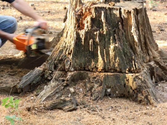 Stump Removal-Riverview FL Tree Trimming and Stump Grinding Services-We Offer Tree Trimming Services, Tree Removal, Tree Pruning, Tree Cutting, Residential and Commercial Tree Trimming Services, Storm Damage, Emergency Tree Removal, Land Clearing, Tree Companies, Tree Care Service, Stump Grinding, and we're the Best Tree Trimming Company Near You Guaranteed!