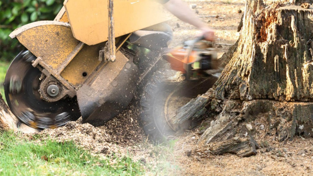 Stump grinding & removal-Riverview FL Tree Trimming and Stump Grinding Services-We Offer Tree Trimming Services, Tree Removal, Tree Pruning, Tree Cutting, Residential and Commercial Tree Trimming Services, Storm Damage, Emergency Tree Removal, Land Clearing, Tree Companies, Tree Care Service, Stump Grinding, and we're the Best Tree Trimming Company Near You Guaranteed!