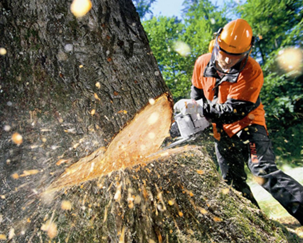 Tree Cutting-Riverview FL Tree Trimming and Stump Grinding Services-We Offer Tree Trimming Services, Tree Removal, Tree Pruning, Tree Cutting, Residential and Commercial Tree Trimming Services, Storm Damage, Emergency Tree Removal, Land Clearing, Tree Companies, Tree Care Service, Stump Grinding, and we're the Best Tree Trimming Company Near You Guaranteed!