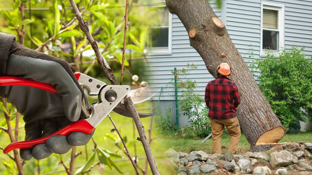 Tree pruning & tree removal-Riverview FL Tree Trimming and Stump Grinding Services-We Offer Tree Trimming Services, Tree Removal, Tree Pruning, Tree Cutting, Residential and Commercial Tree Trimming Services, Storm Damage, Emergency Tree Removal, Land Clearing, Tree Companies, Tree Care Service, Stump Grinding, and we're the Best Tree Trimming Company Near You Guaranteed!